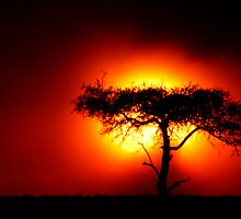 Sun Tree by Steve Bulford