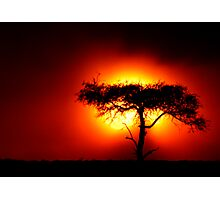 Sun Tree Photographic Print