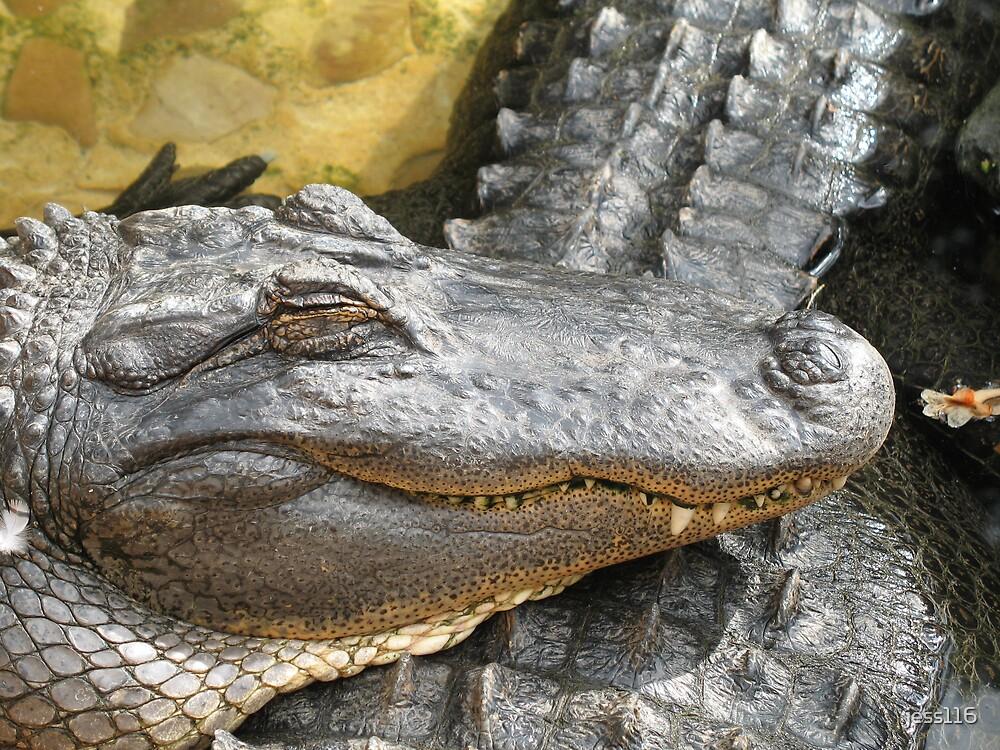 American Alligator by jess116