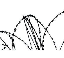 Razor Wire Photographic Print