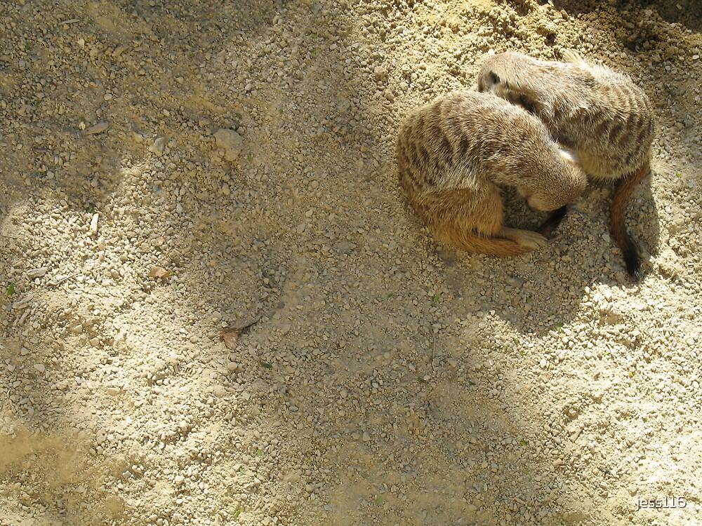 Meerkats Cuddles by jess116