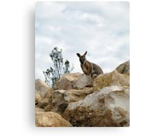 Yellow-Footed Rock Wallaby Canvas Print