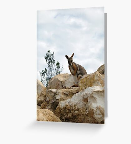Yellow-Footed Rock Wallaby Greeting Card