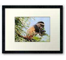 Golden Monkey Framed Print