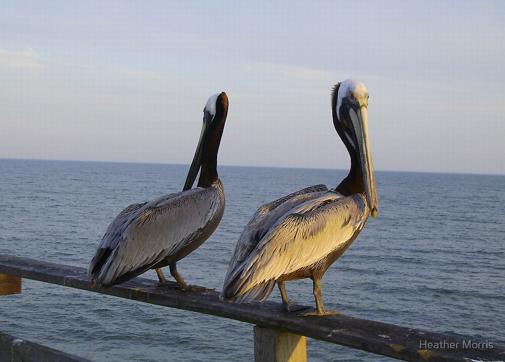 MIrrored Pelicans by Heather Morris