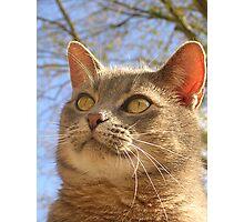 Feline Face Photographic Print