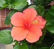 flower by nickwisner