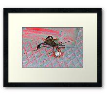 Ugly Bug Framed Print