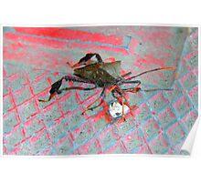 Ugly Bug Poster
