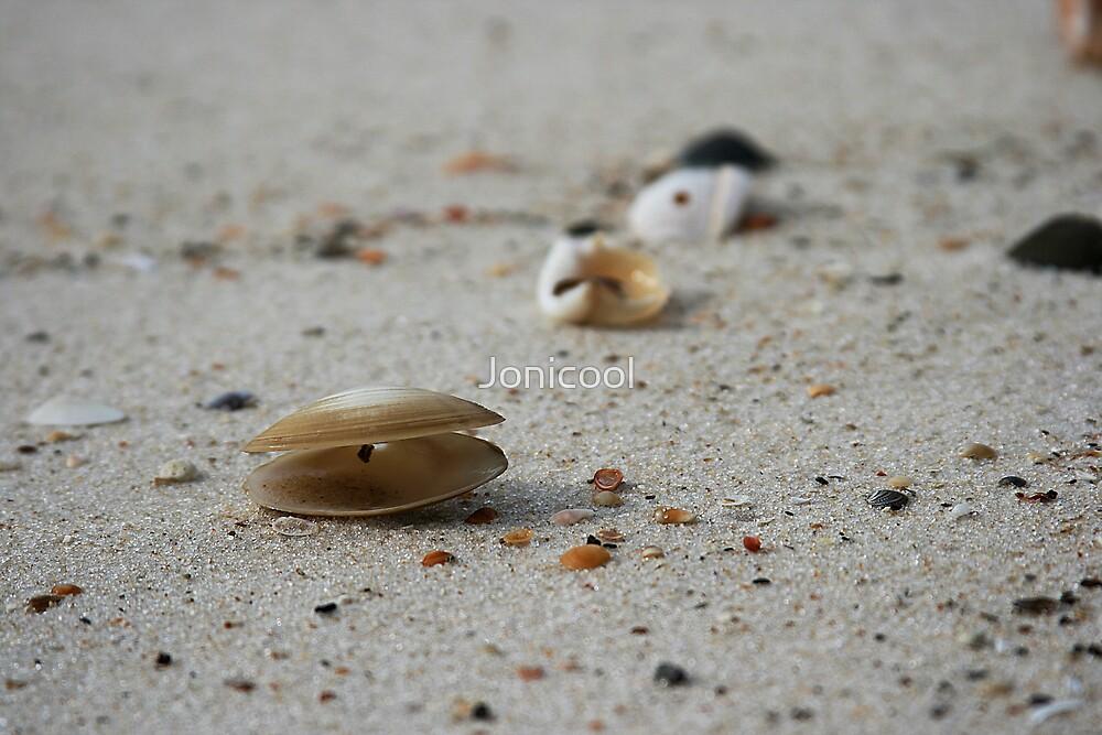 Shells by Jonicool