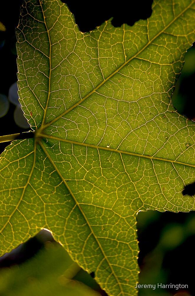 Leaf Lines by Jeremy Harrington