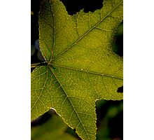 Leaf Lines Photographic Print