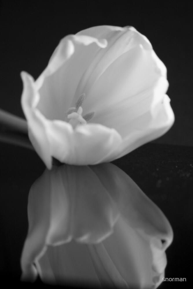 Elegant  by snorman