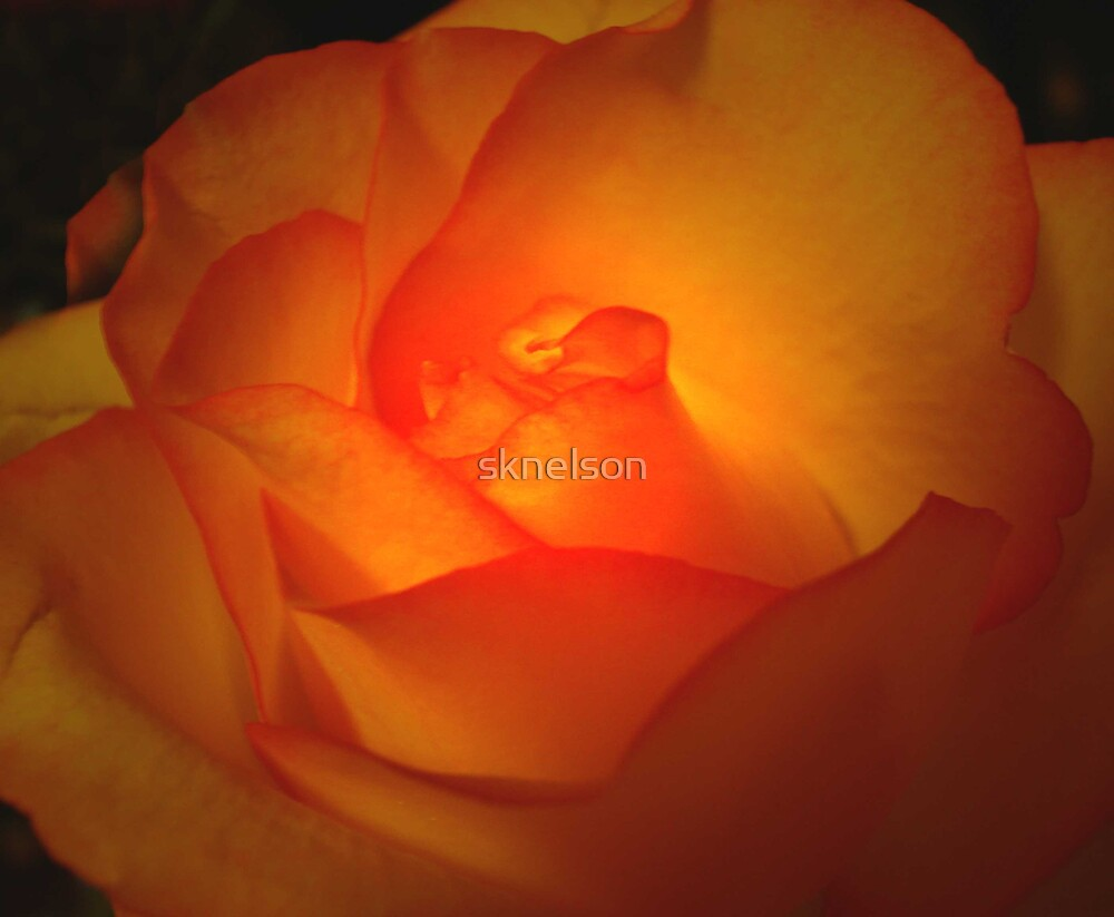 Beauty on the Inside by sknelson