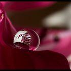 Diminutive Beauty by Jenni77
