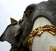elephant  by jonlunsford