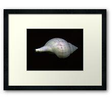 Sea Shell #7 Framed Print