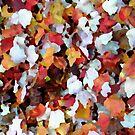 autumn leaves by Bruce  Dickson
