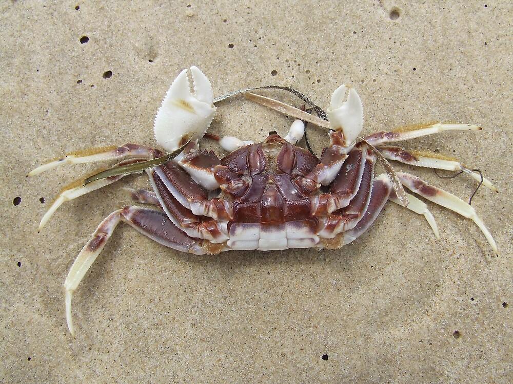 Sand Crab by Samara  Lee