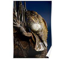 Reptilian Gaze Poster