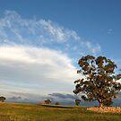 Casey's Hill ruins by langar