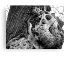 Old oak in Greenwich Park Canvas Print