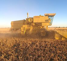 Looking for Grain -- Harvest 2007 by langar