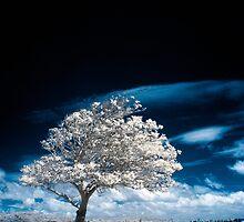 Beneath A Black Sky by Naomi Frost