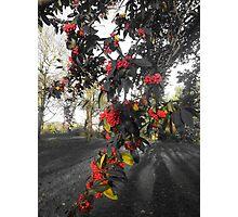 Fruitful Autumn Photographic Print