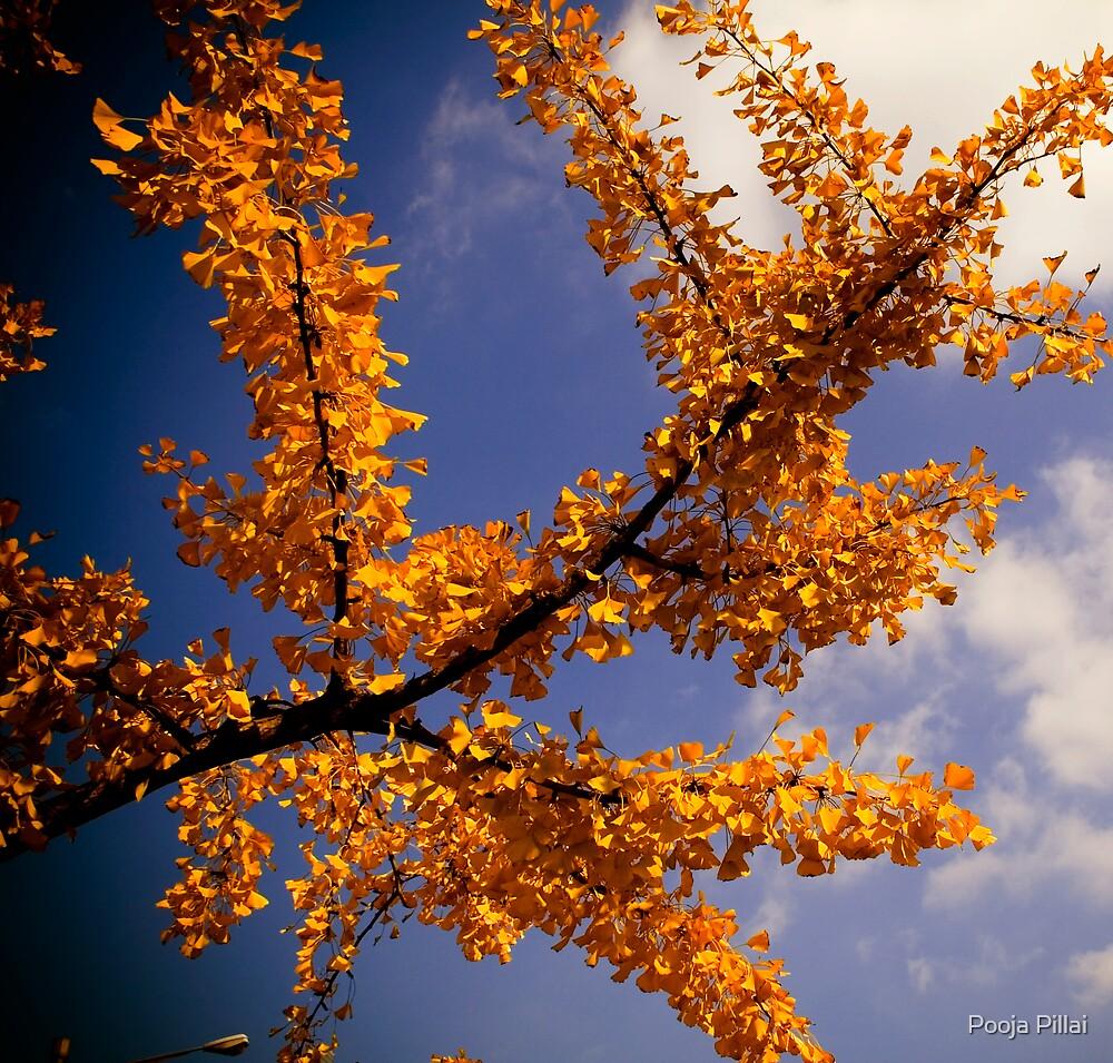 Season of Mellow Fruitfulness by Pooja Pillai
