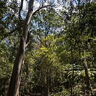 Katoomba rain forest by Frits Klijn (klijnfoto.nl)