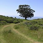 Lone Oak At The End Of The World - Mt. Tamalpais, Marin County, CA by Rebel Kreklow