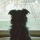 Doggie in the Window by Joy  Rector