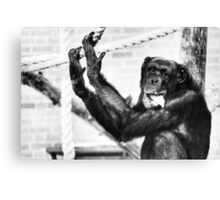 Black and White Chimp Canvas Print