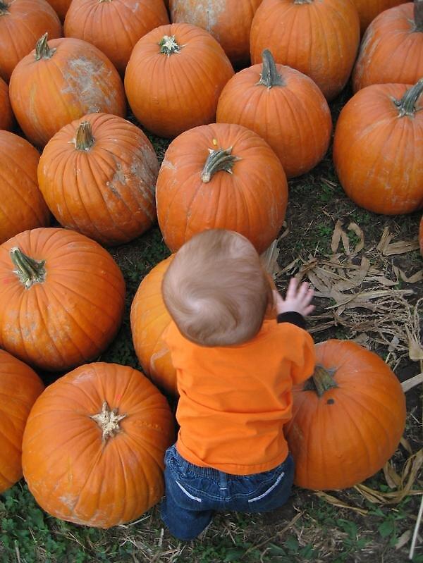 Pumpkins by AvenLove