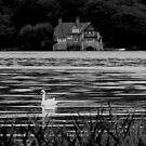 swan lake by grimbomid