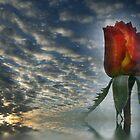 Dreamy Rose by Kimberly Palmer