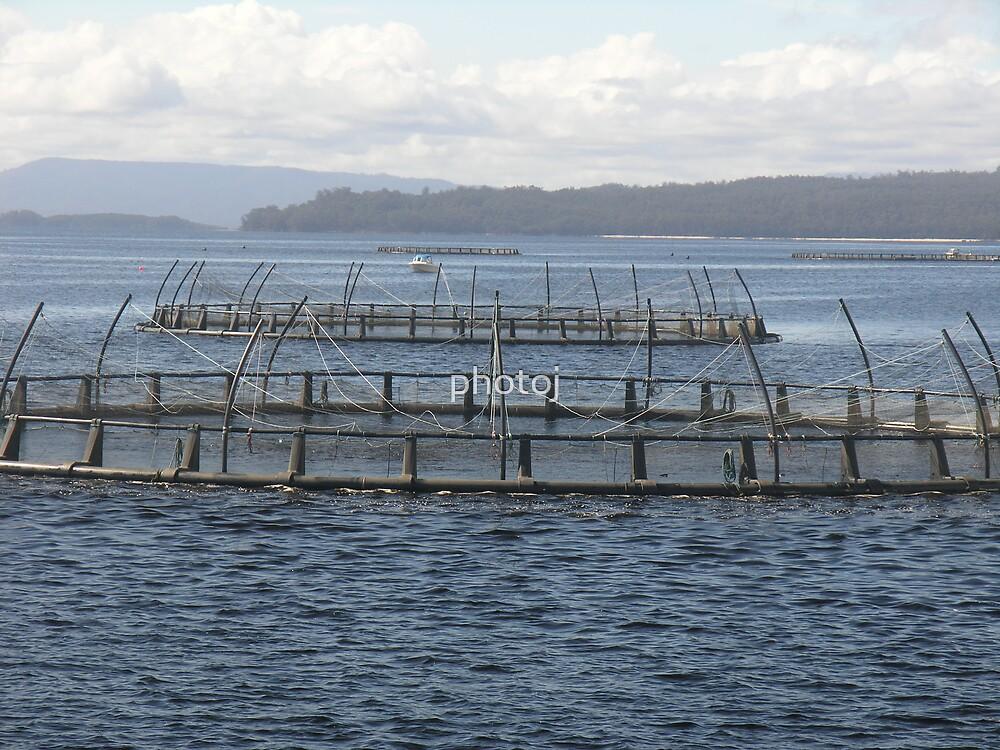 photoj Tas, Fish Farm by photoj