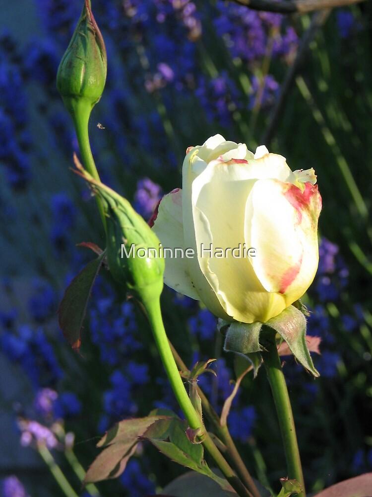 Rose and Lavender by Moninne Hardie