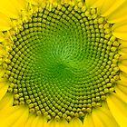 Eternal Sunshine by Raphael Lopez