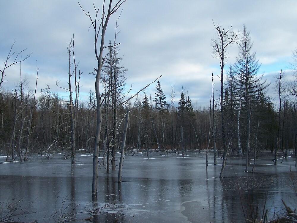 Freezing Swamp by Gene Cyr