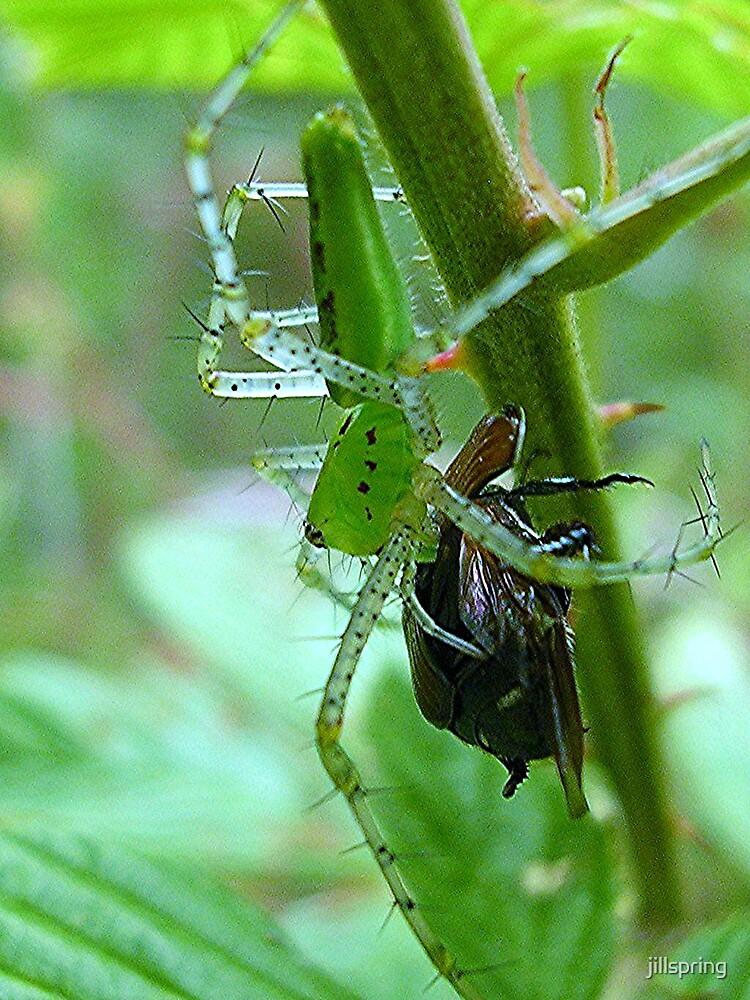 Green Spider by jillspring