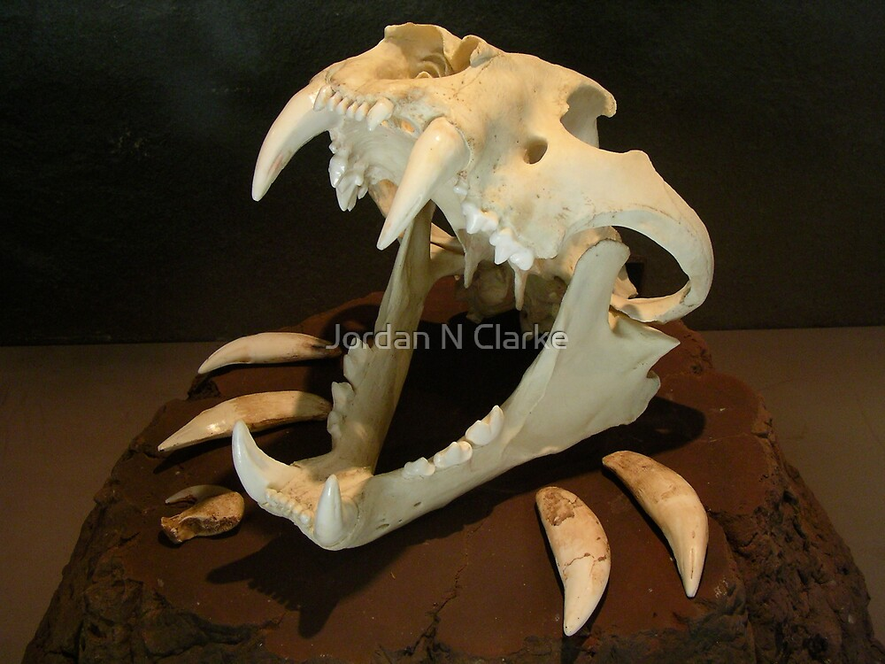 Tiger Skull by Jordan N Clarke