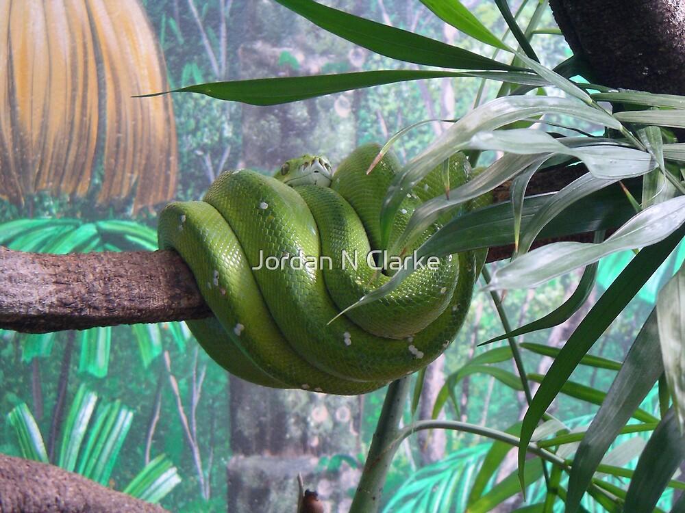 Green Snake by Jordan N Clarke