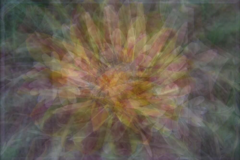 Daisy Abstract by Kay  G Larsen