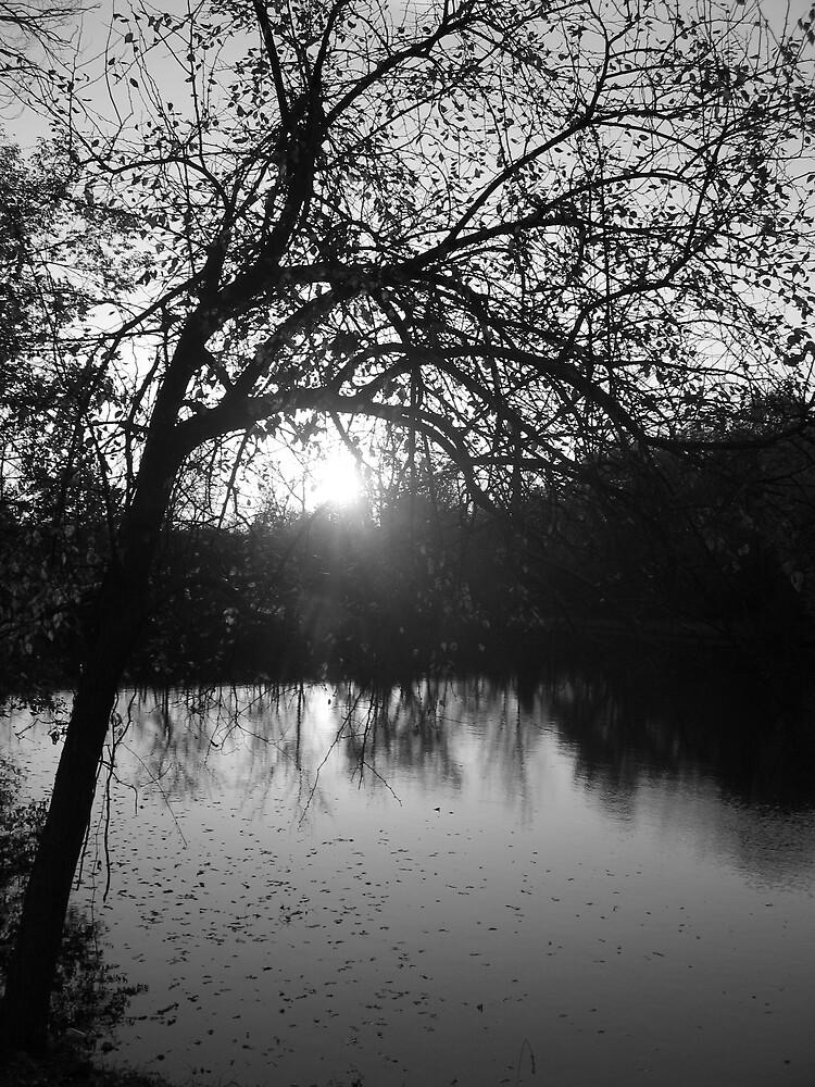 Pretty Pond by AvenLove