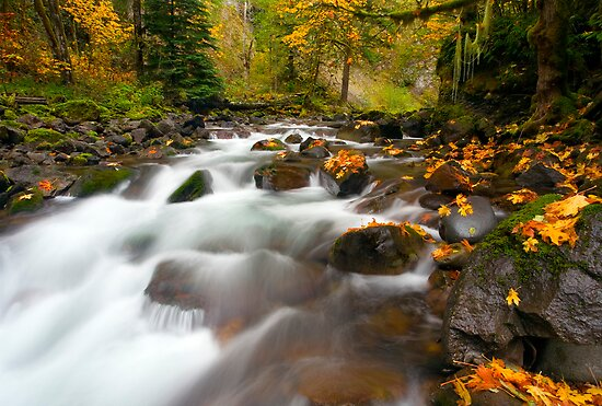Autumn Passages by DawsonImages