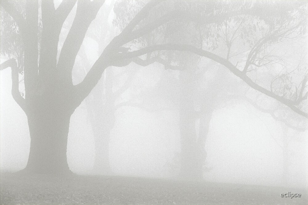 foggy trees by eclipse
