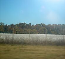 Cotton Fields by emma155