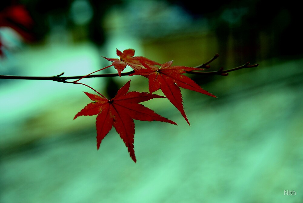 11 Autumn by Nith
